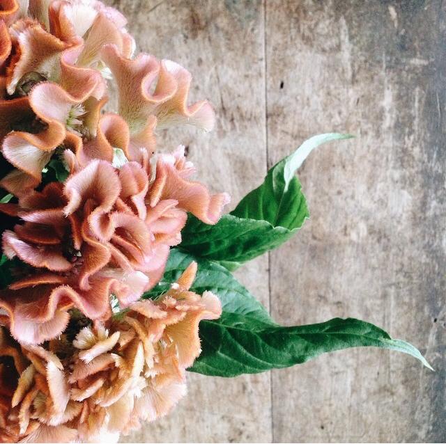 FloralOctober 48.jpg
