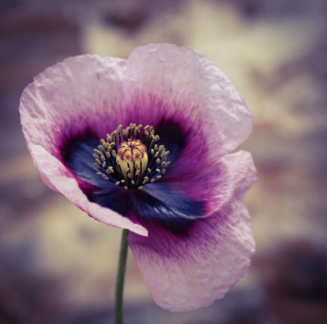 FloralOctober 49.jpg
