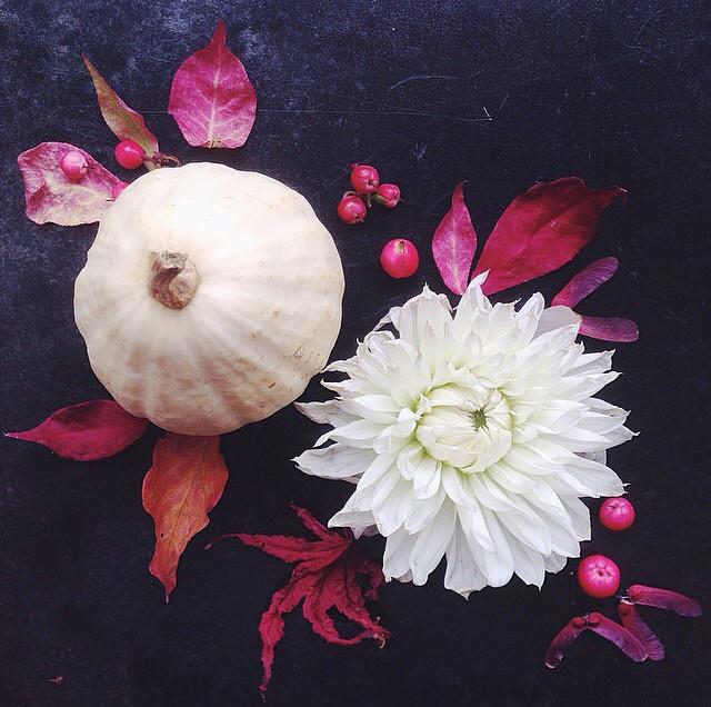 FloralOctober 51.jpg