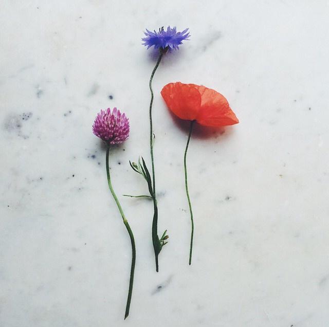 FloralOctober 61.jpg