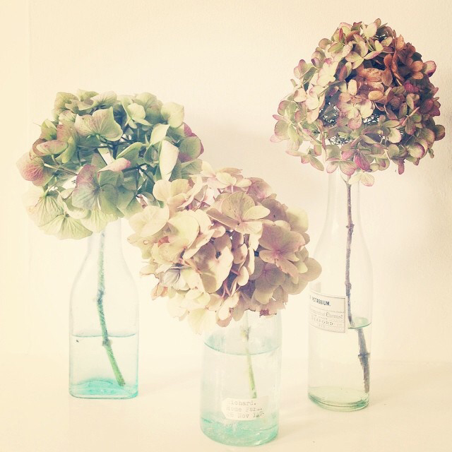 FloralOctober 64.jpg