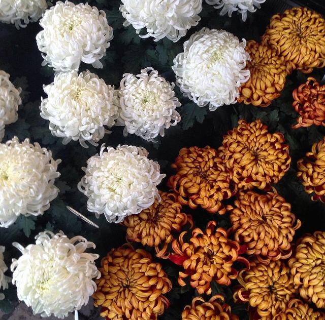 FloralOctober 62.jpg