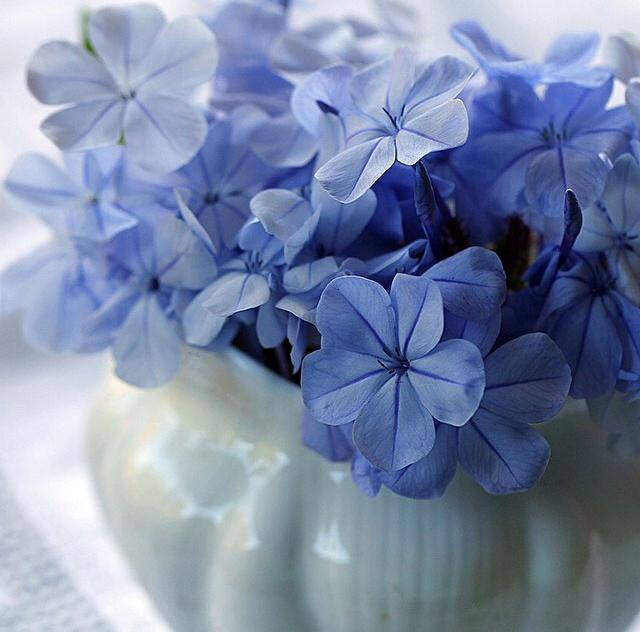 FloralOctober 68.jpg