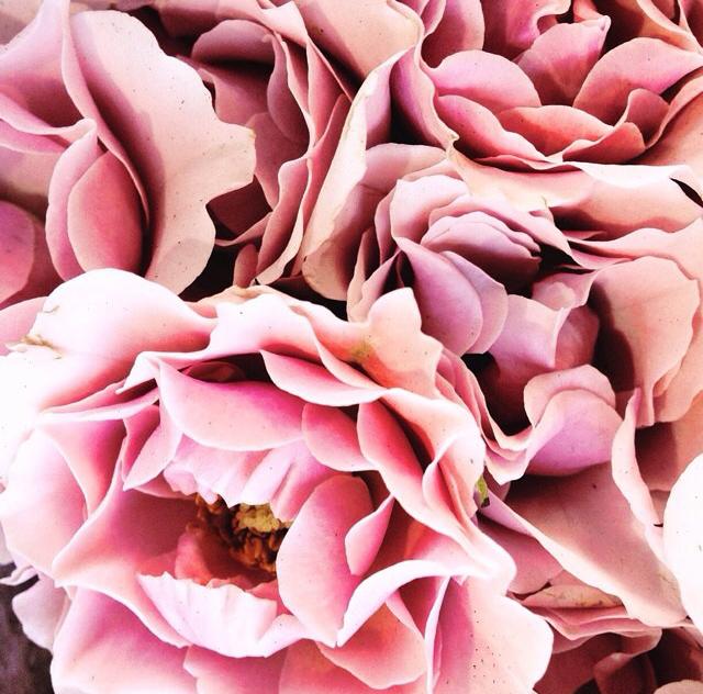 FloralOctober 80.jpg