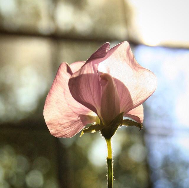 FloralNovember 4.jpg