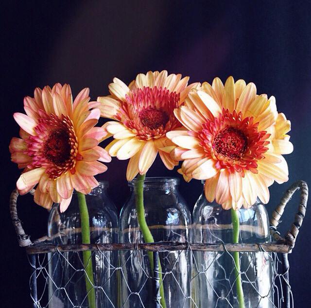 FloralNovember 5.jpg