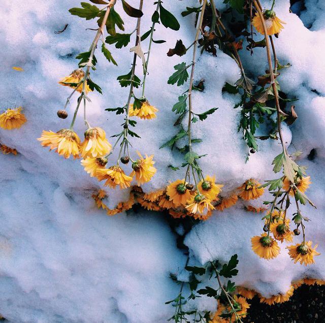 FloralNovember 13.jpg