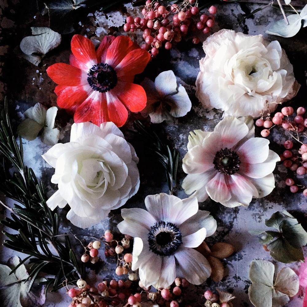 Emily Quinton Botanicals 11.jpg