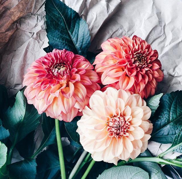 Floral Friday Winner 41.jpg
