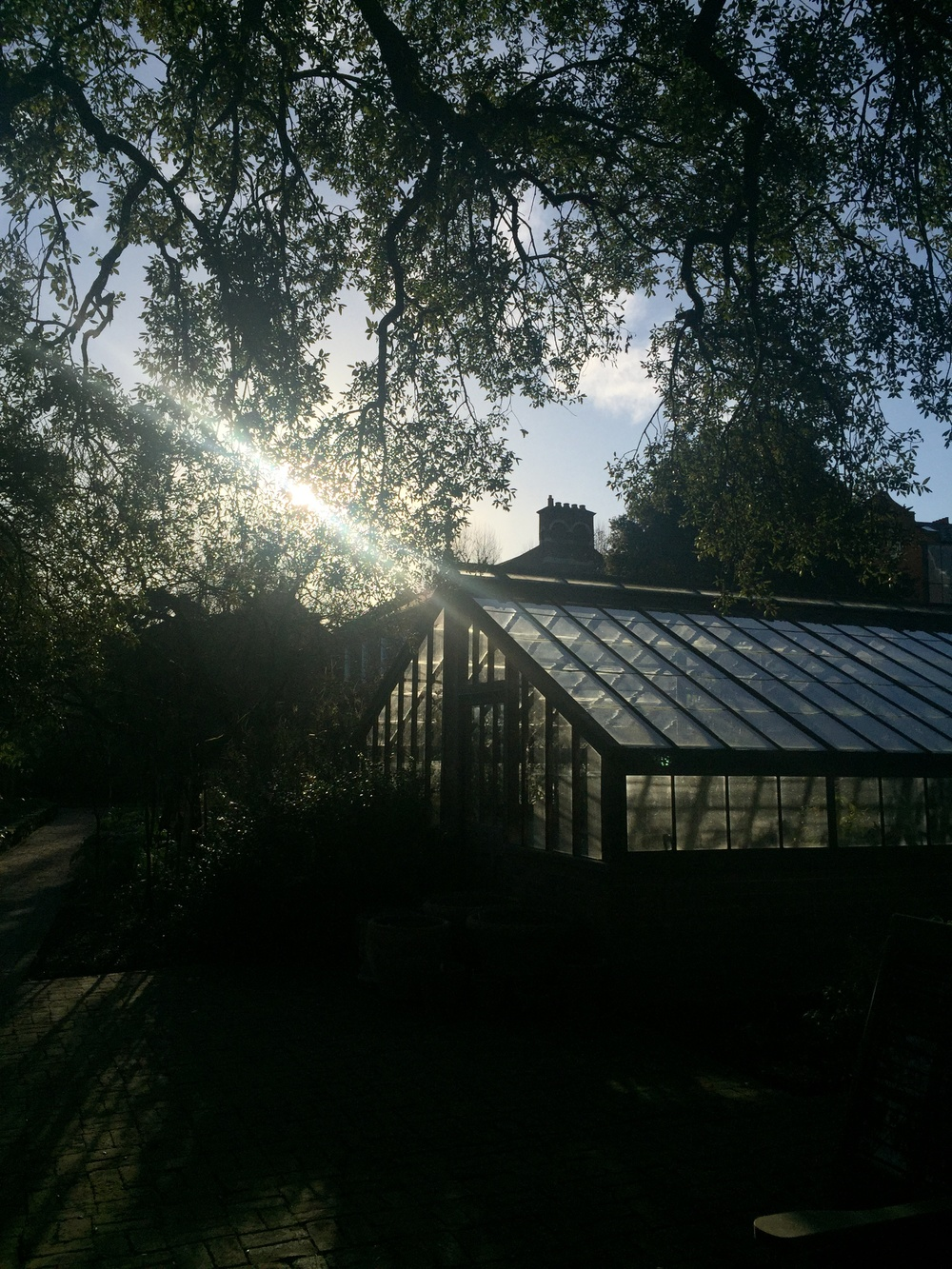 Chealsea Physic Garden | Makelight