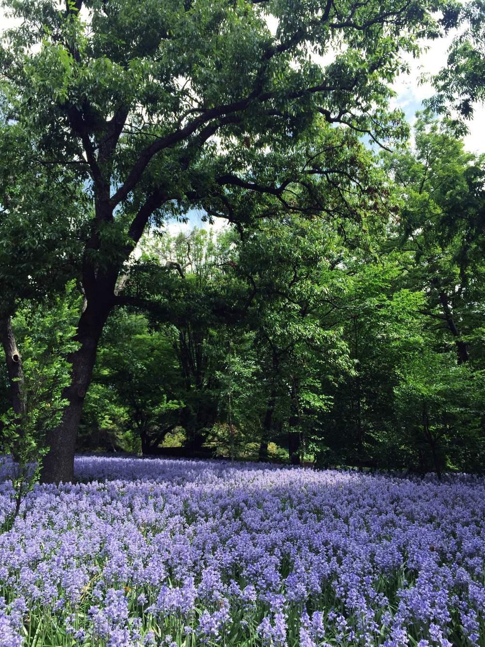 Brooklyn Botanic Garden | Makelight