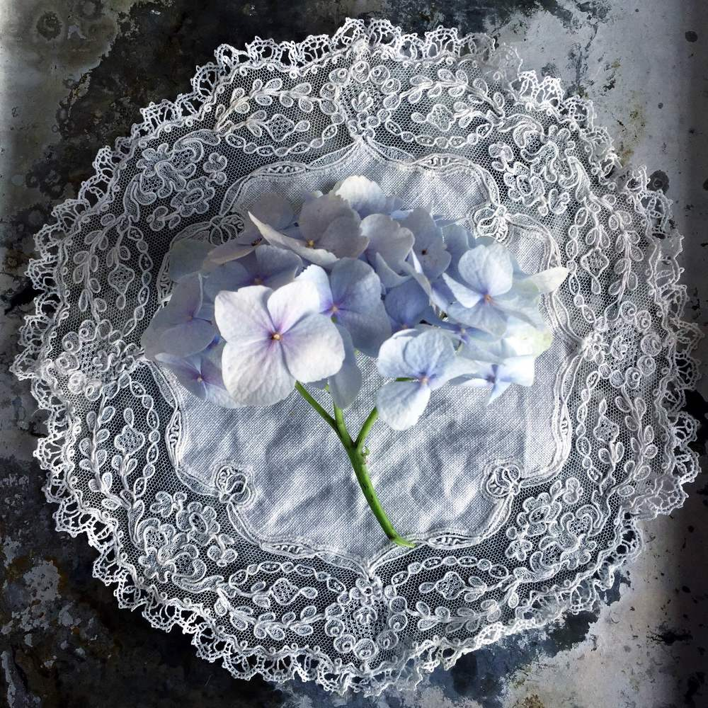 Photographing Flowers | Hydrangea