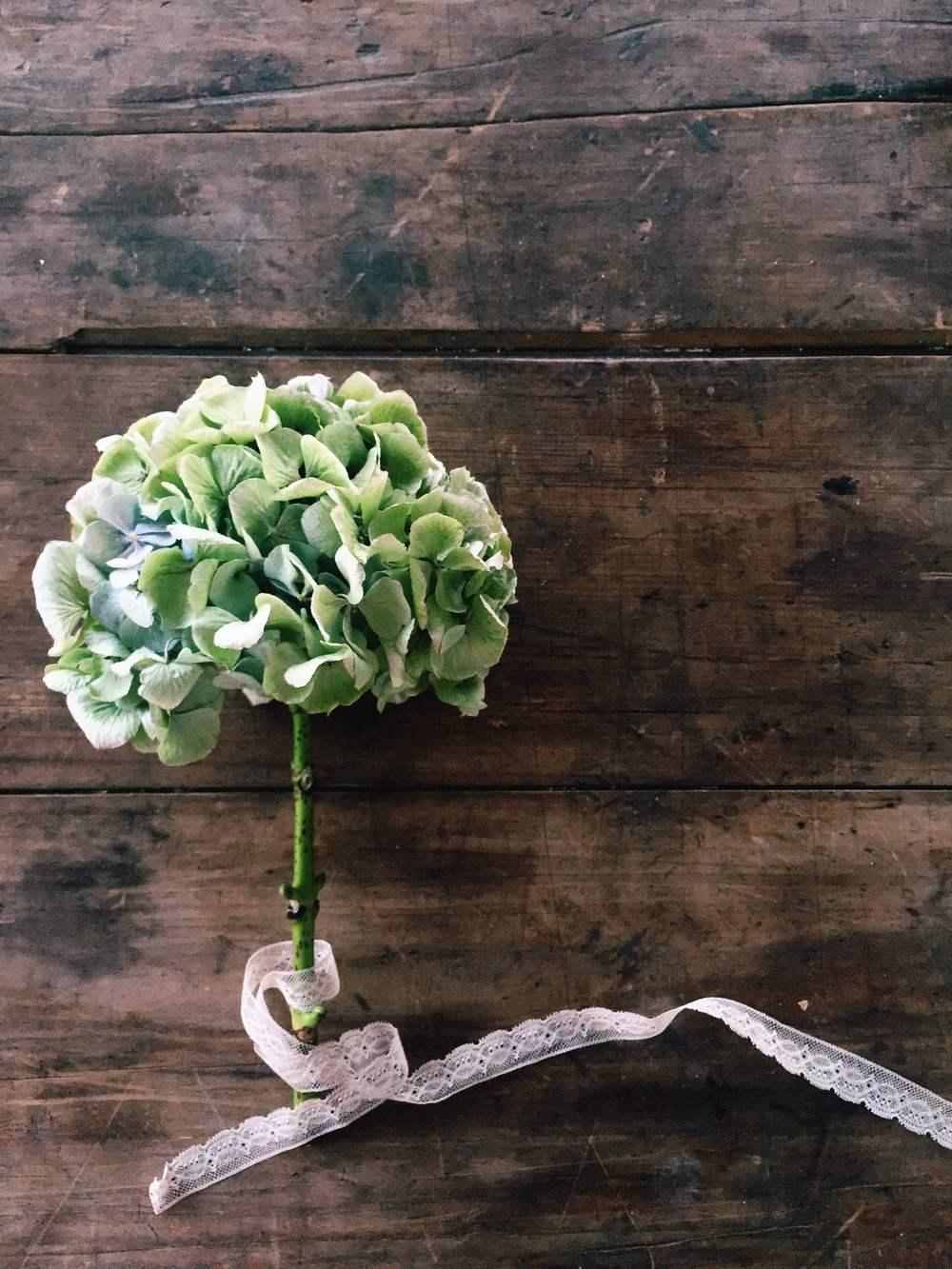 Photography Flowers | Hydrangea