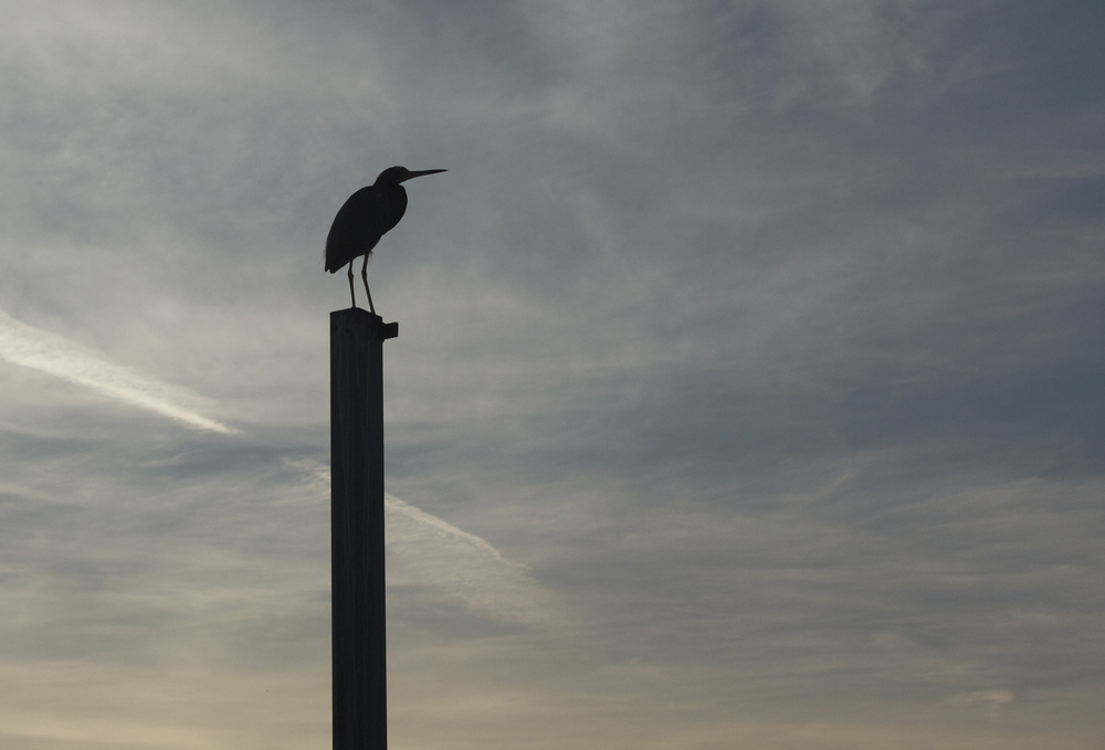 My old friend silhouetted the sky.