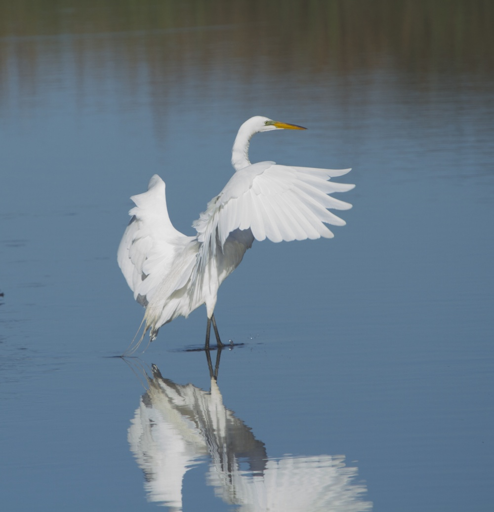 The Egret gently touches down.
