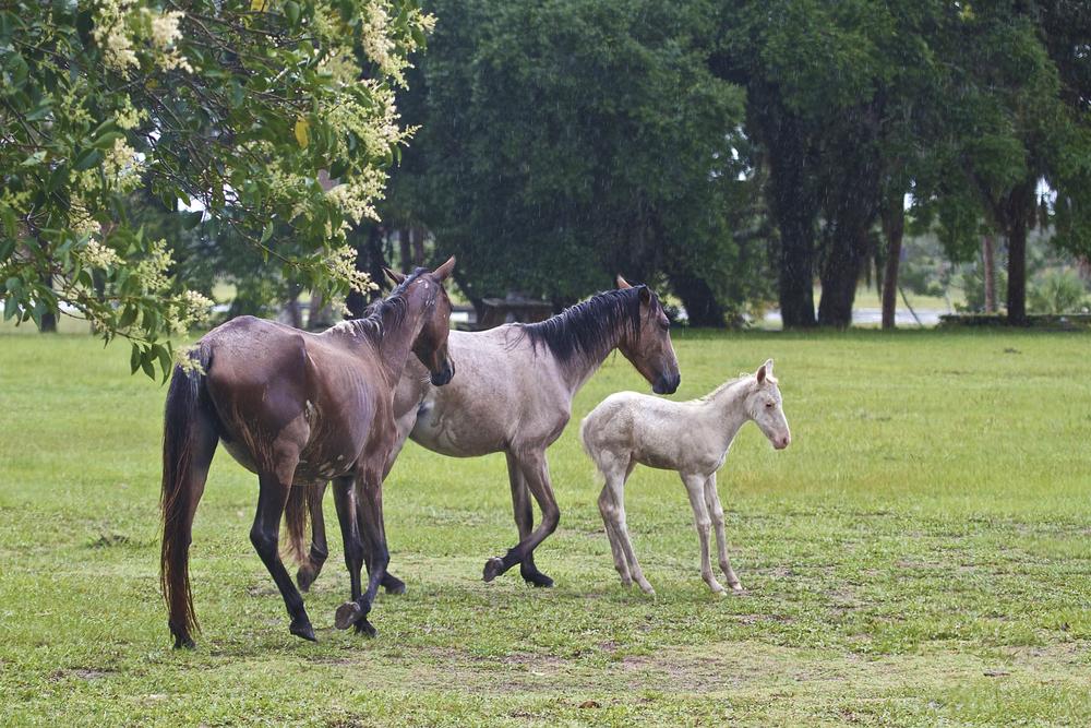 Piebald foal