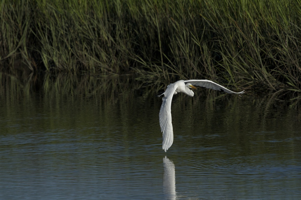A sweeping turn, its wing nearly kisses the water.