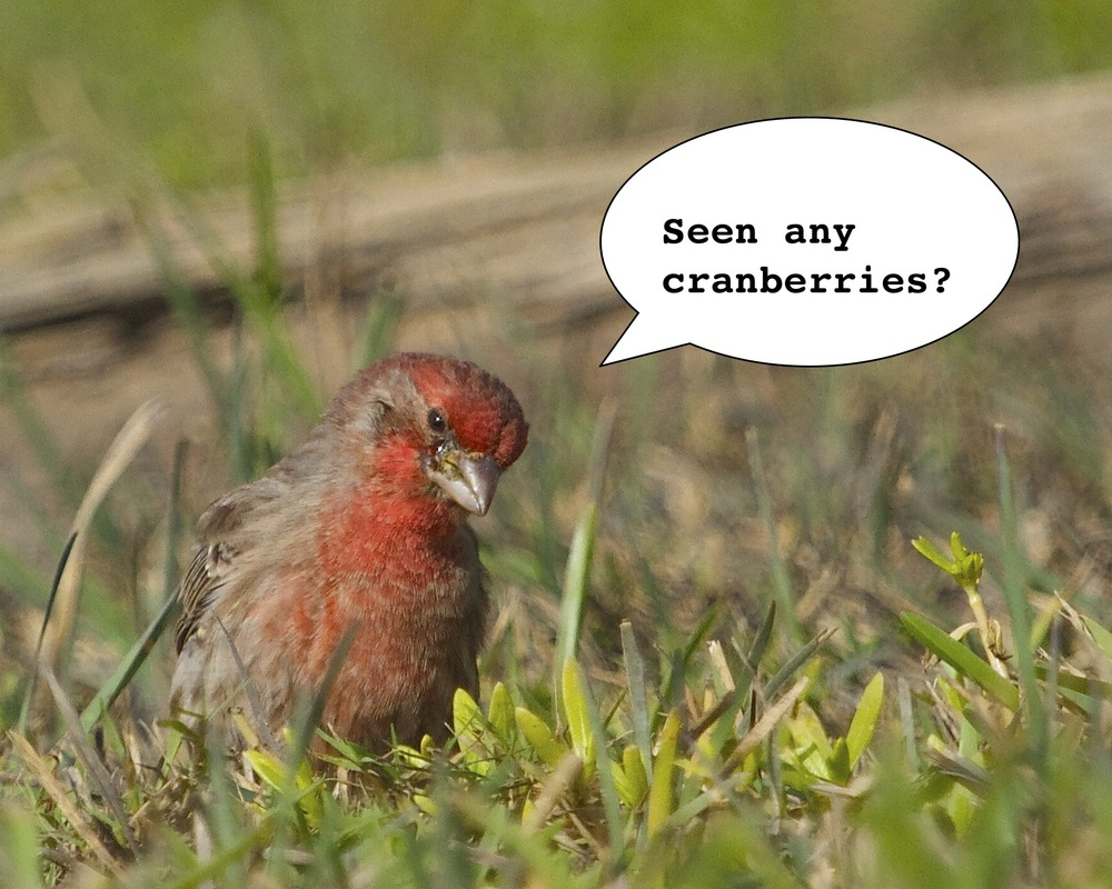 Got any cranberries?