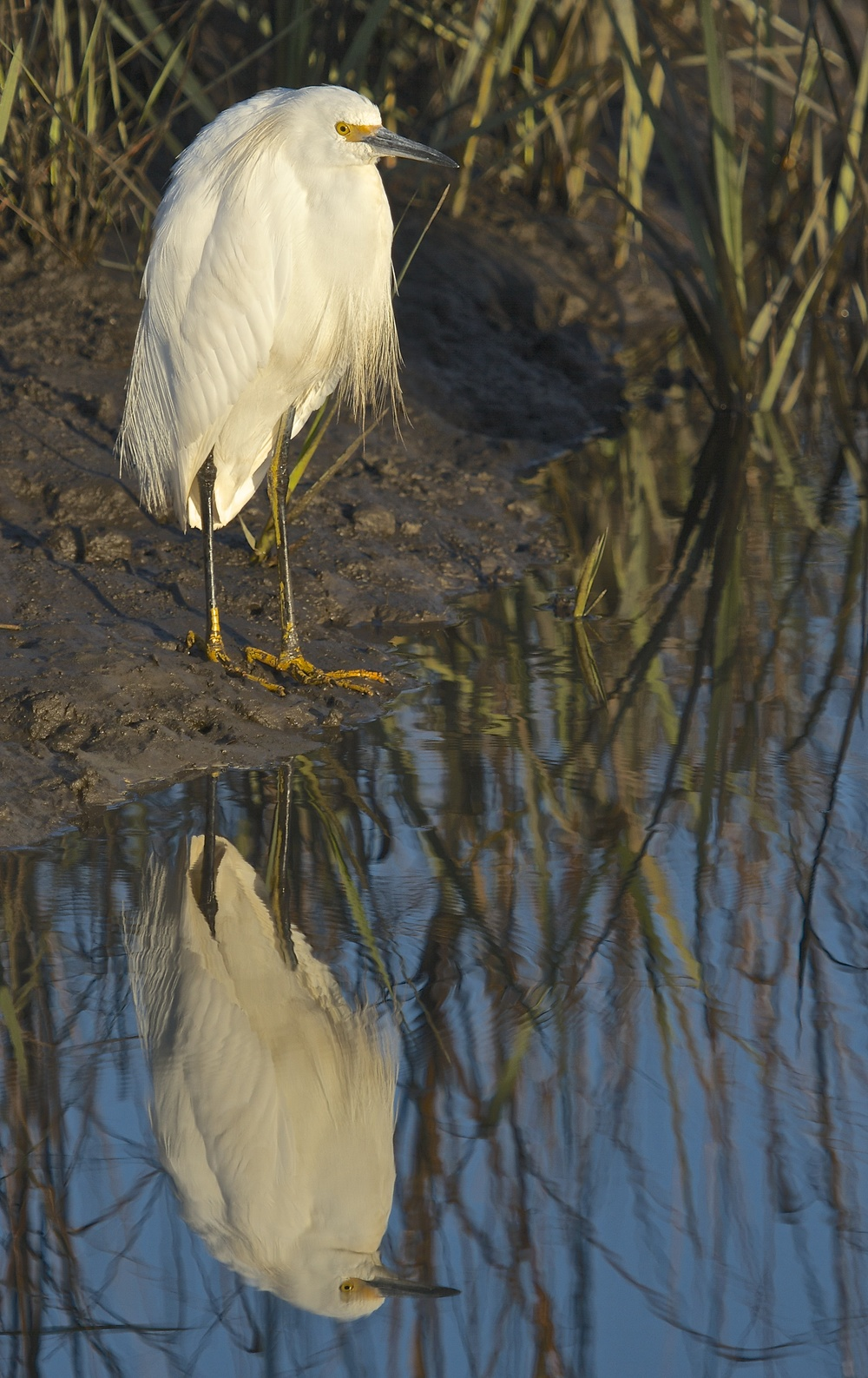 Seemingly like this egret I grumble about life and circumstance as I reflect..then..