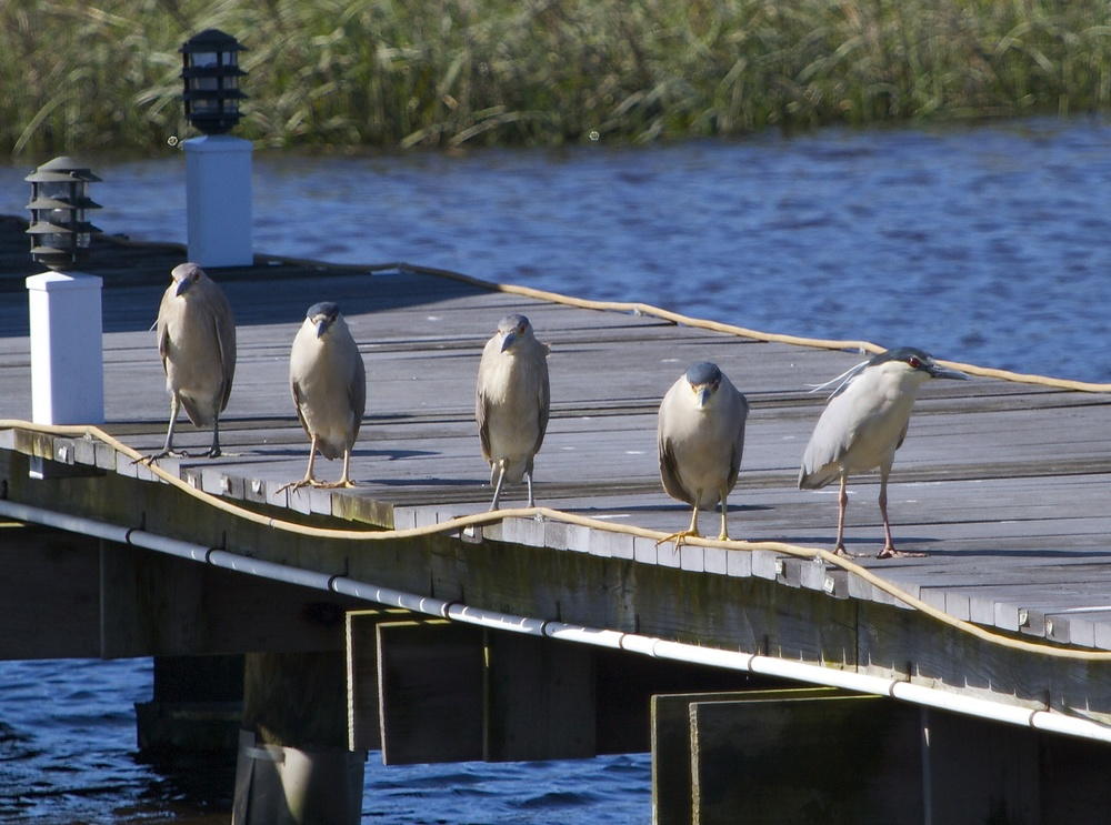 "Ok, you over there, put down the camera or we are all going to an  extraordinary  ""poop"" on the dock! Right George?"