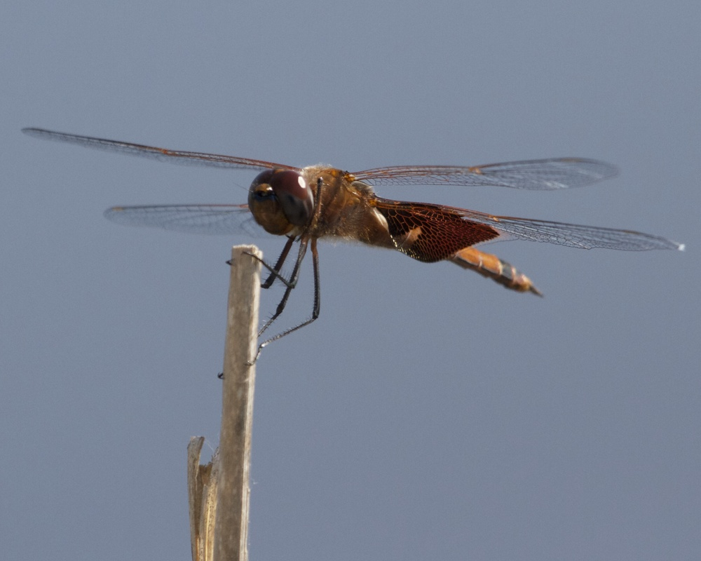 The dragon fly makes its landing. ( there were no birds to photograph ok?)
