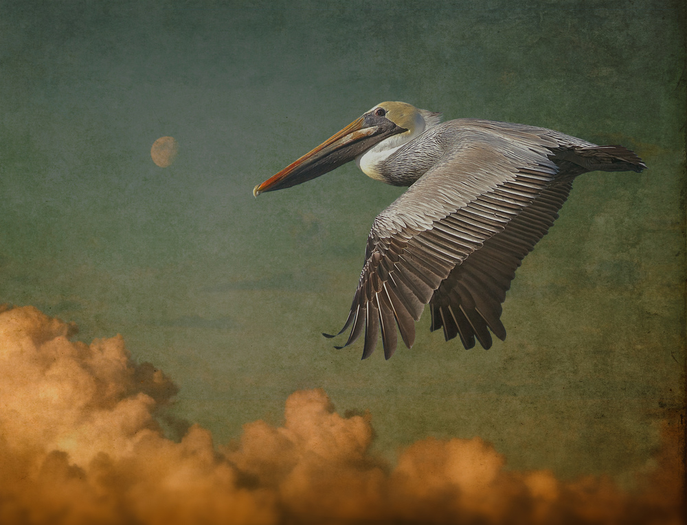 Here I took the same Pelican, added a different sky, added a layer with an ancient wall texture and some blurring to give it a an aged vintage look. This is the Editor's favorite so far.