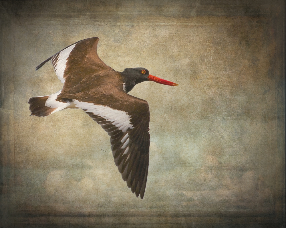 I call this one Oystercatchers Rockefeller..did a similar technique using an antique wall background over a faint sky overlay. My version of ancient cave paintings with a modern twist..this will be printed on canvas.