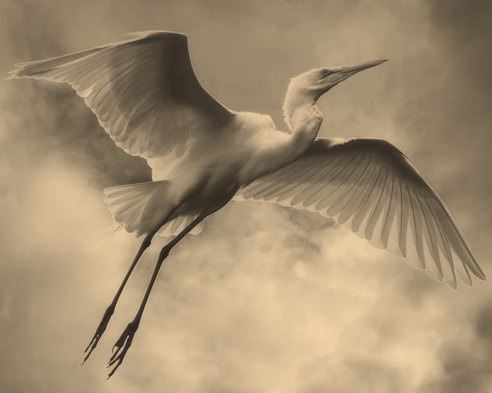 Sailing like a feather in the wind (Calotype Glass Negative effect)