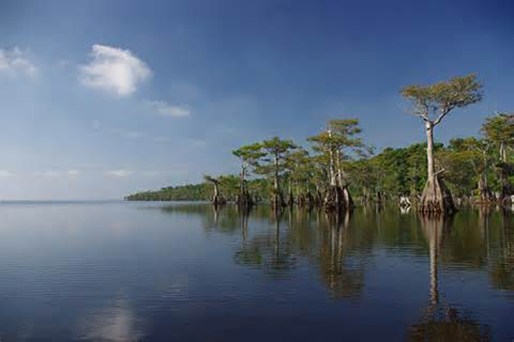Blue Cypress Lake…A Place in the Sun for sure..Photo courtesy of Bing Blue Cypress Photo workshop..photographer unknown..