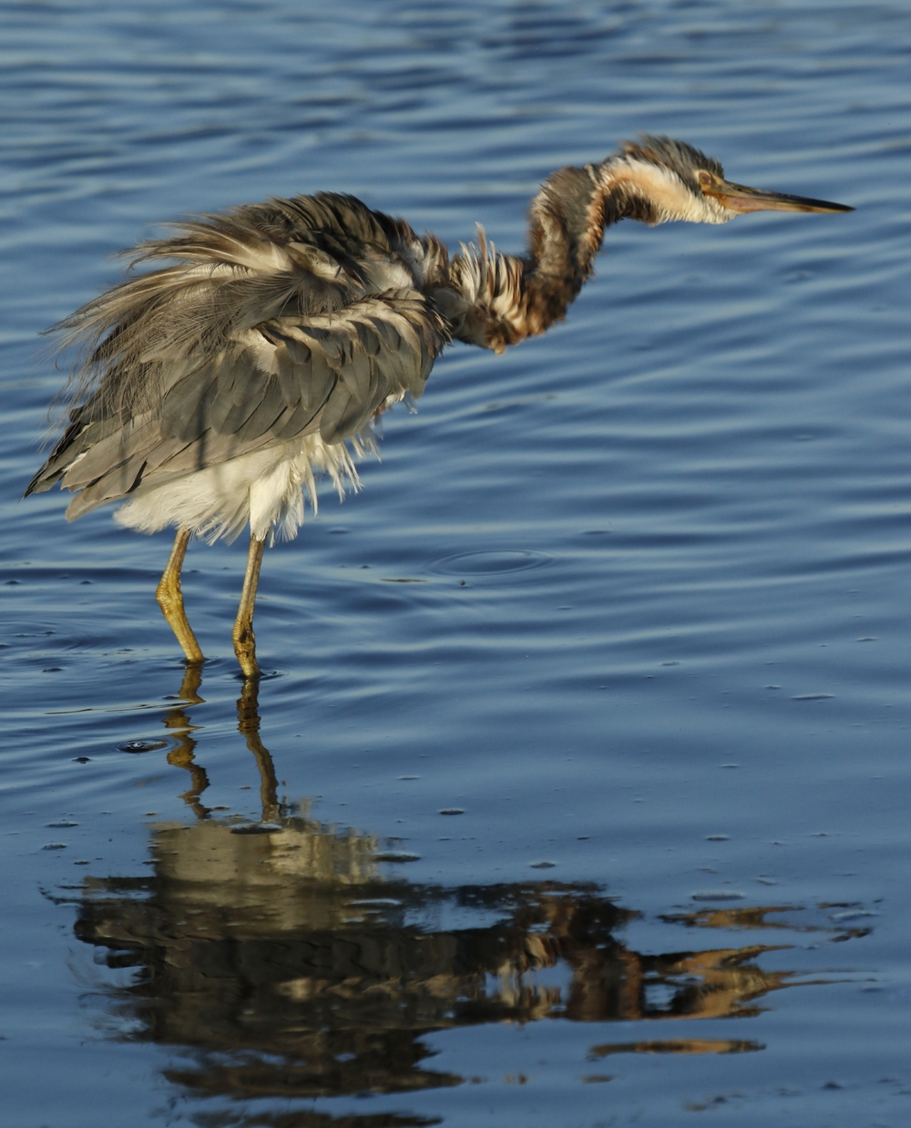 "Don't get all ""Bent out of shape"" like this heron when things don't go as planned.."