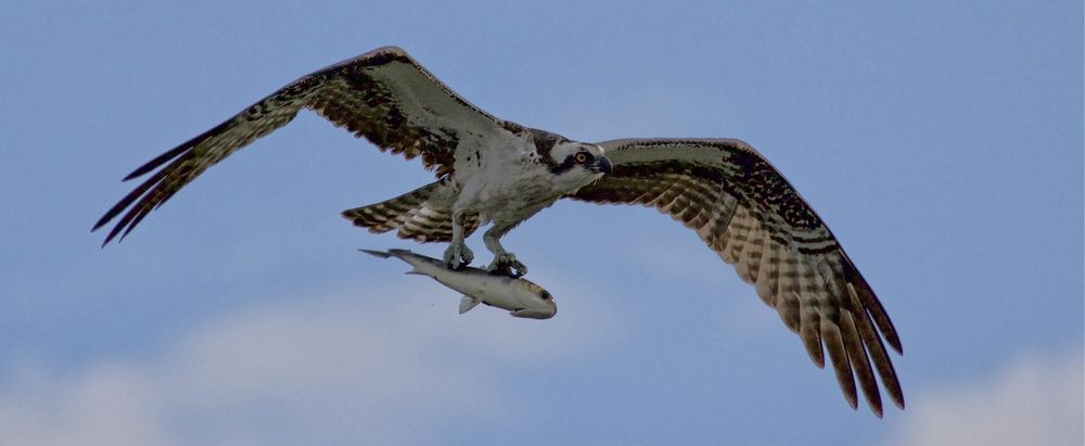Good day for an early morning swim..unless you are a fish and become breakfast for the Osprey..! Bad!