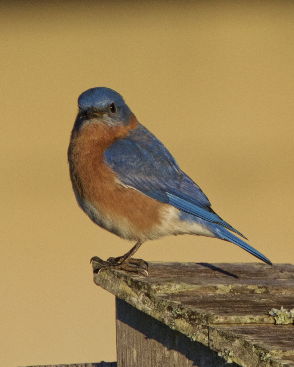 May the Bluebird of happiness shine on you this week..be blessed.