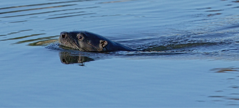 The River Otter then continues on it's morning adventures..