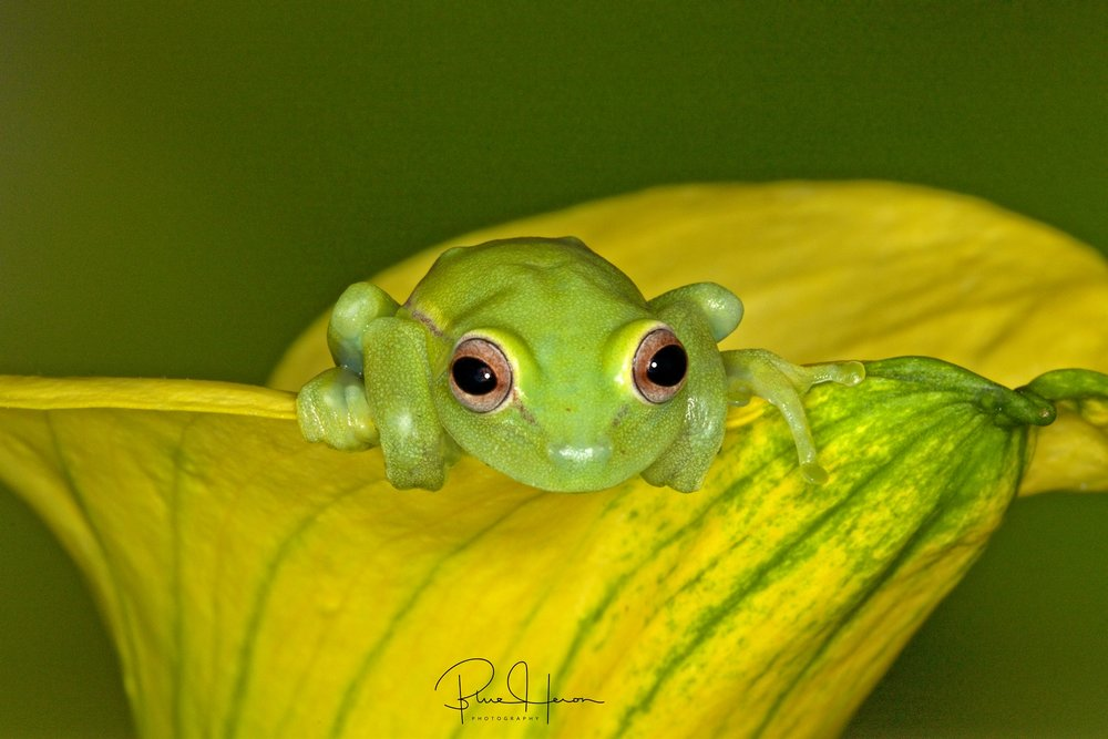It;s Monday, get to work,,,I don't have to cause I'm a Frog!