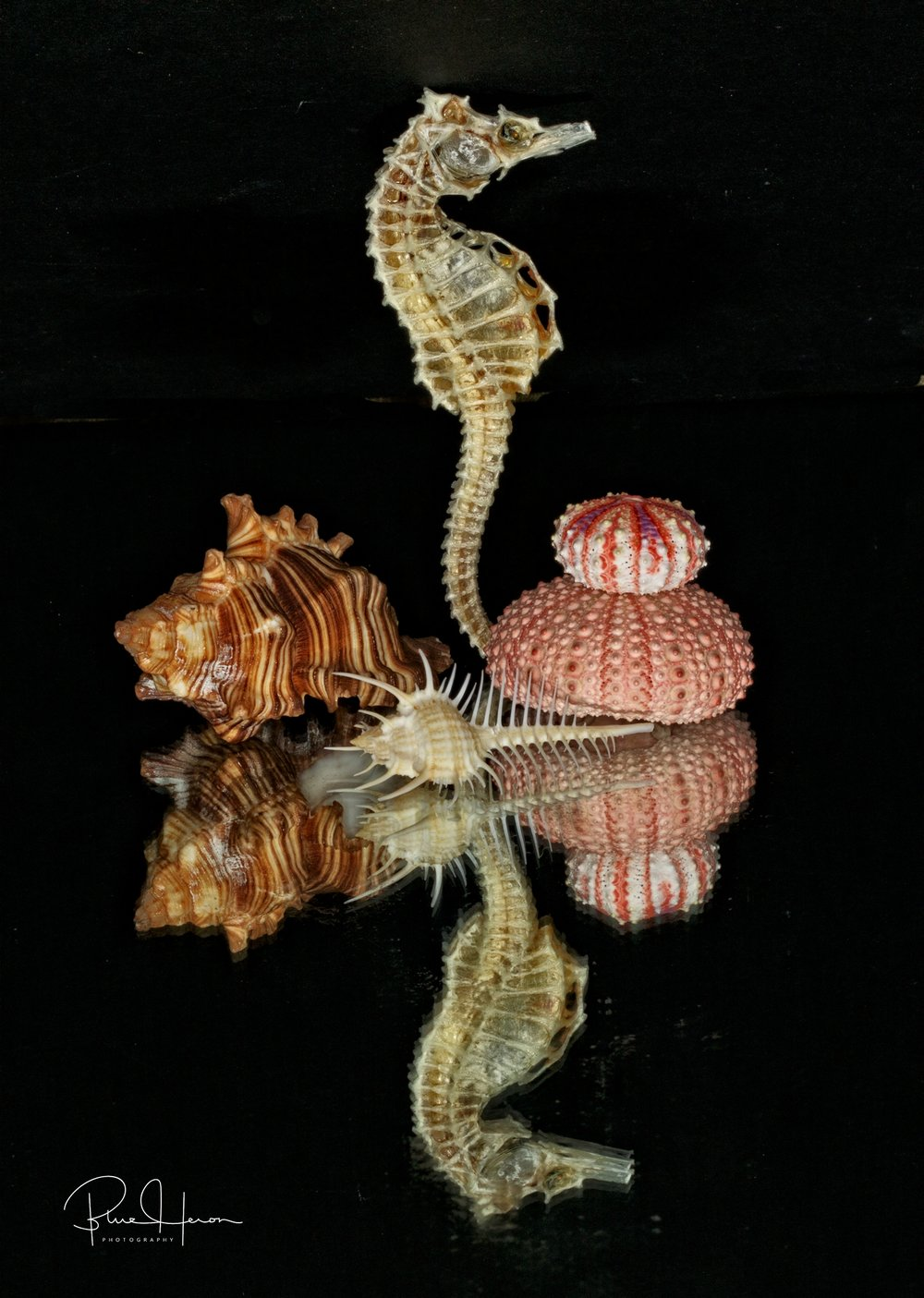 Seahorse and shells