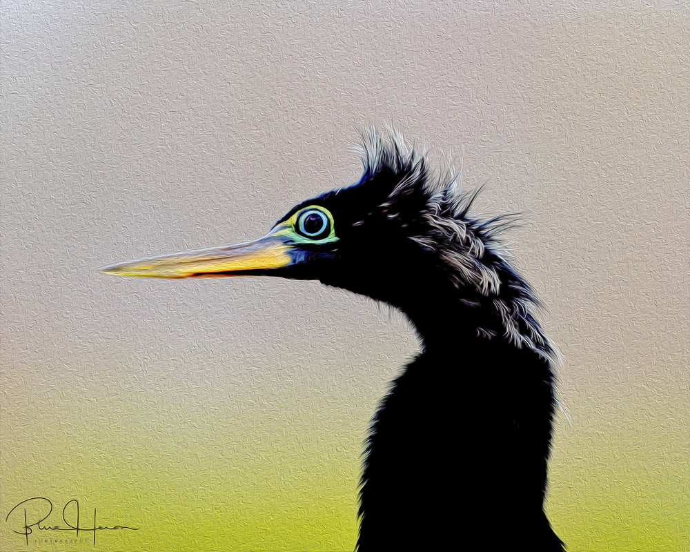 Artistic rendition of an Anhinga male profile