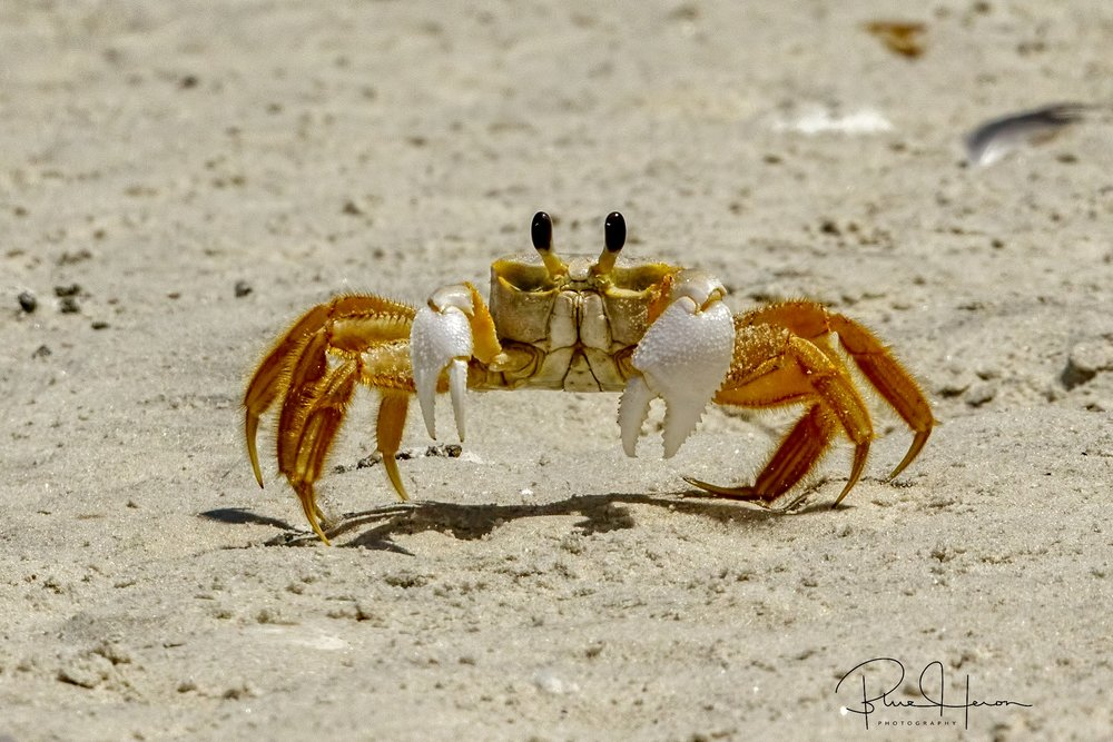 My master always said to be at peace when possible. But when danger arises, it's Crab Fu time!