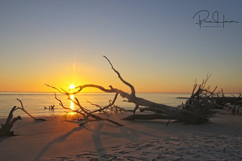 Old tree bones greet the morning sun on Blackrock Beach..