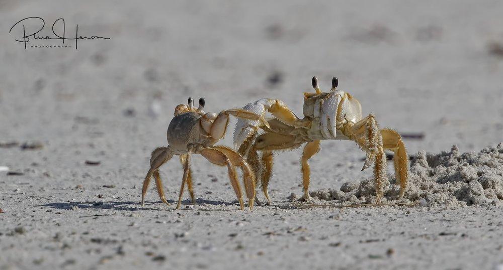 Everybody was Crab-Fu fighting...territorial dispute