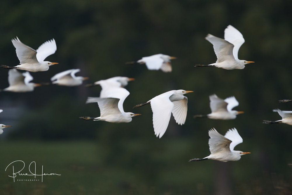In 1/250th of a second, the wingbeats of these birds capture the heartbeat of God…Blessings
