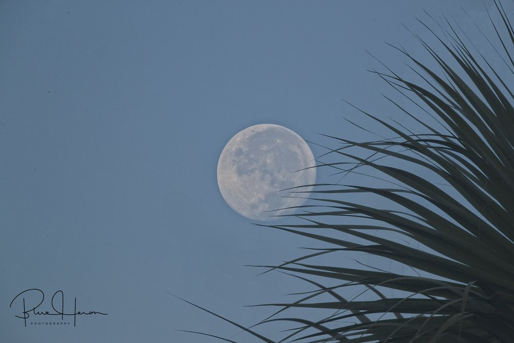 Morning harvest moonset over the Broward