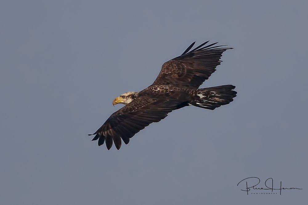 A dark shape swoops in towards the Osprey