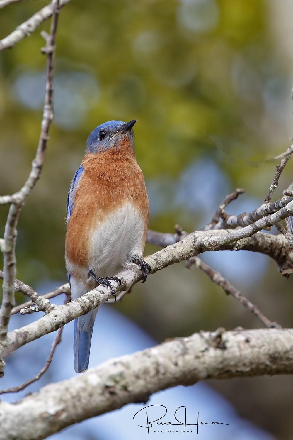 Mr Bluebird has been checking out the nesting box already..