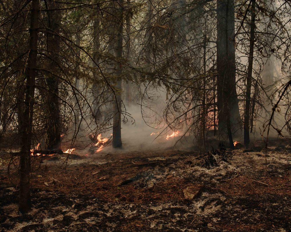 wildfire_289.jpg
