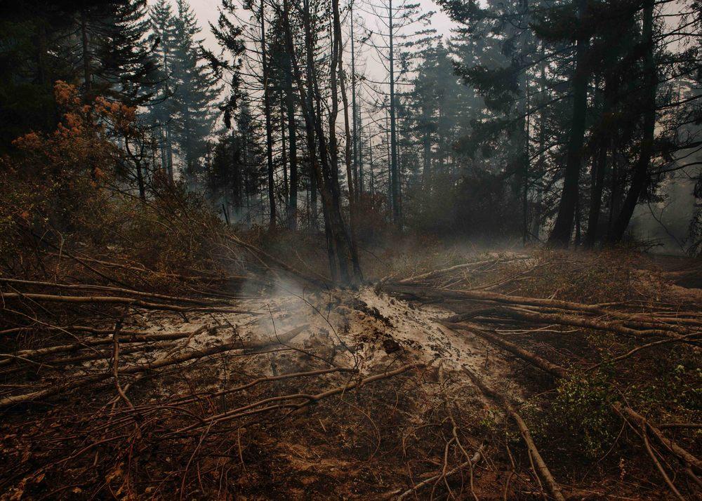 wildfire_309.jpg