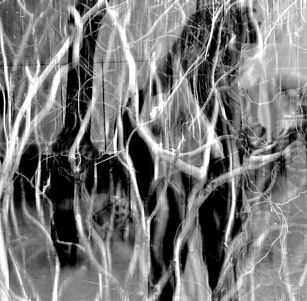 TREE  40  Last.jpg
