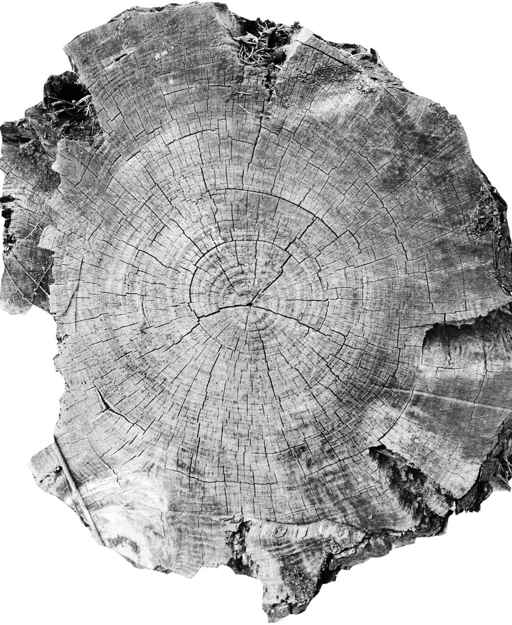 The photograph of the tree