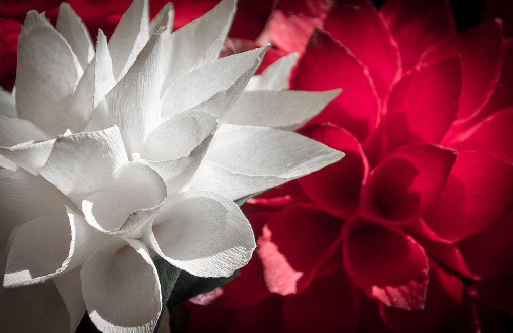 Scarlet and White.jpg