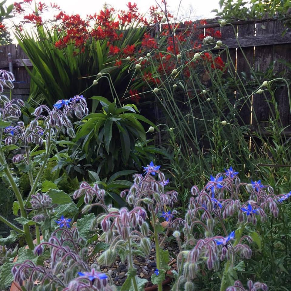 Deb's Garden