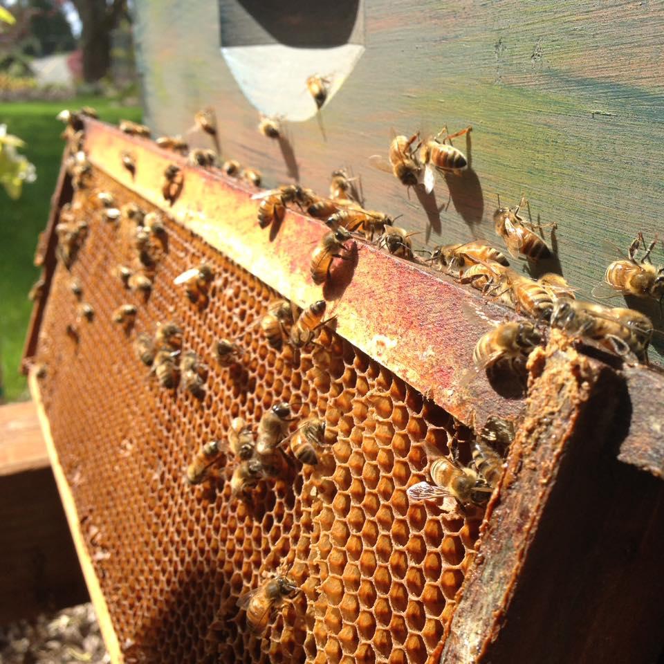 Deb's honeybees